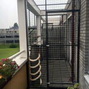 kattenren, kattenren balkon