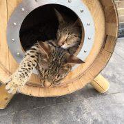 Kattenren inrichting